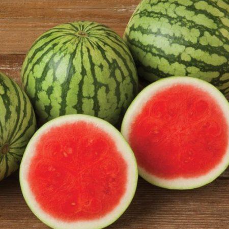 Watermelon Fairbanks Seeds New Zealand